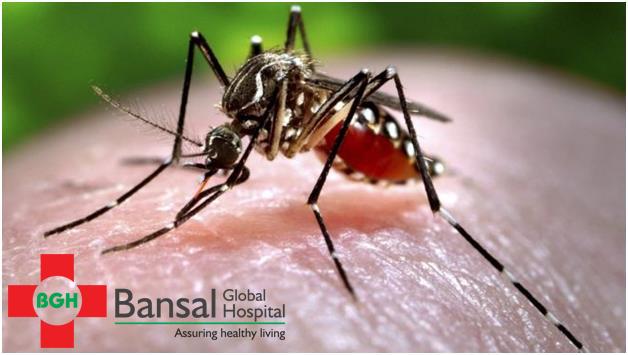 Beware of Mosquito