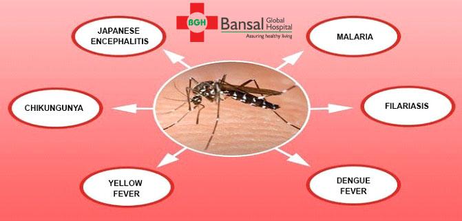 Mosquito-borne-diseases
