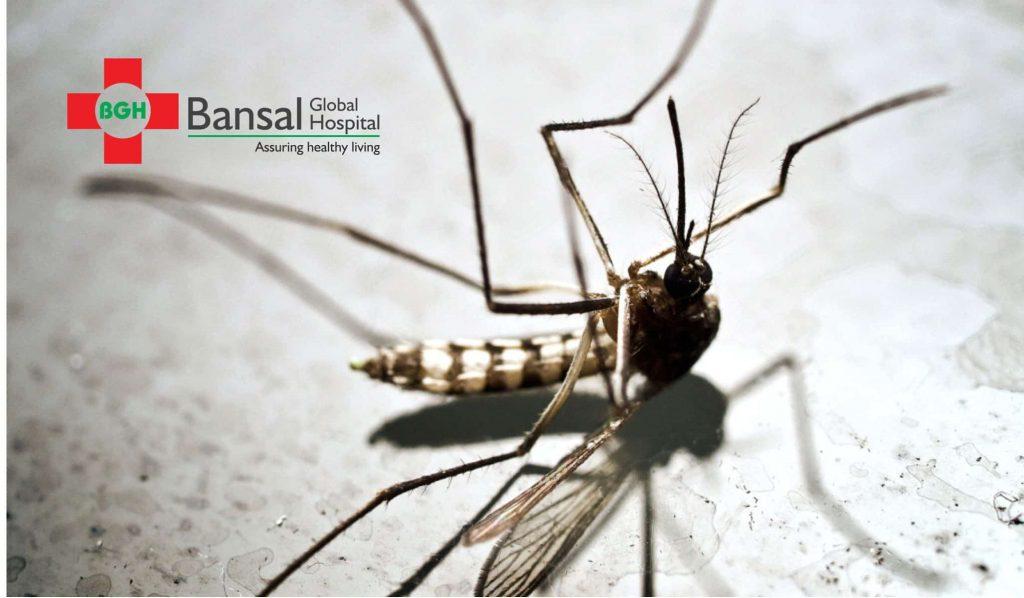 Dengue, Malaria, & Chikungunya