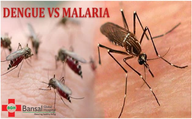 The Dengue Fever is a Mosquito - Bansal Global Hospital