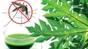 Food Items for Dengue Patients