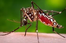 How to Prevent Yourself from Dengue